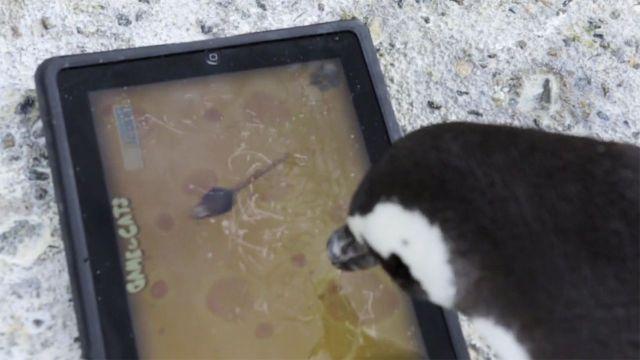 3039779-inline-i-1-penguins-ipad-cats-640x360