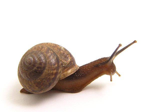 Snail_with_Eyes_Up_600